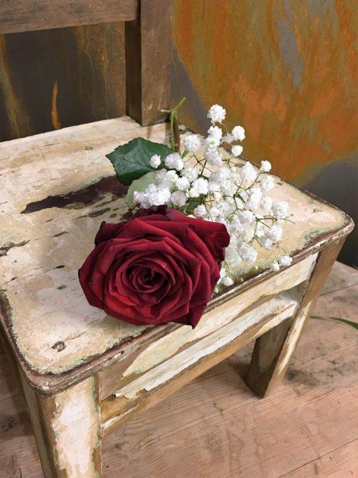 Röd ros med brudslöja