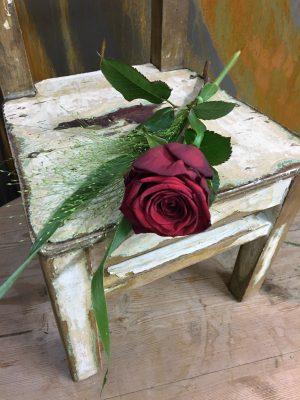 Röd ros med fontängräs